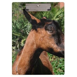 oberhasli doe ears back goat animal image clipboard