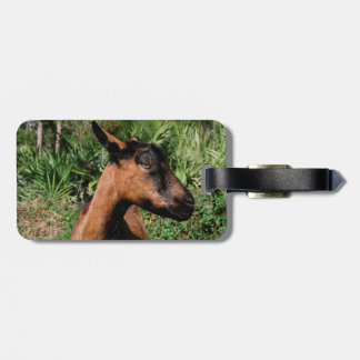 oberhasli doe ears back goat animal image bag tag