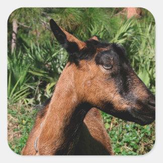 oberhasli doe ears back goat animal image sticker
