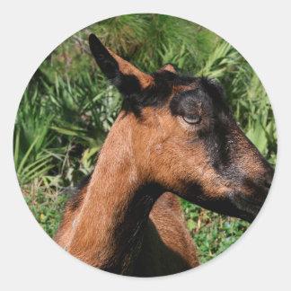 oberhasli doe ears back goat animal image stickers