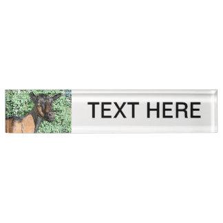 oberhasli doe goat animal image name plate