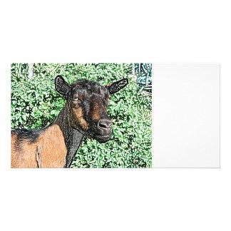 oberhasli doe goat animal image photo card
