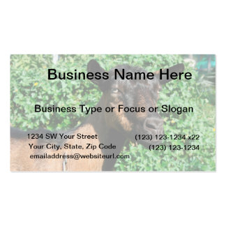 oberhasli goat doe side view business card