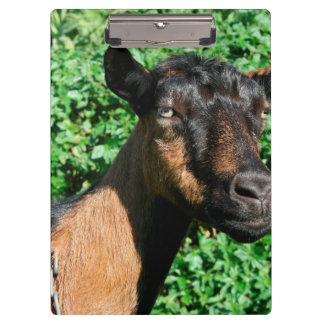 oberhasli goat doe side view clipboard