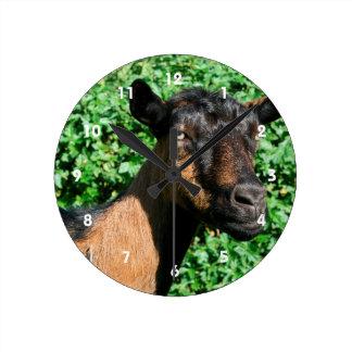 oberhasli goat doe side view round clock