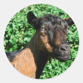oberhasli goat doe side view round sticker