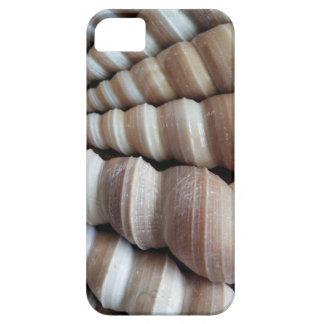 Oblong  Summer Seashells, Summer Season iPhone SE/5/5s Case