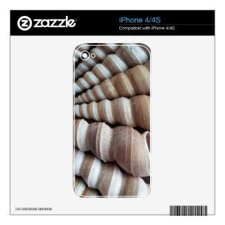 Oblong  Summer Seashells, Summer Season Decals For The iPhone 4
