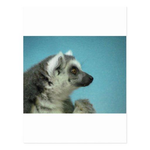 obra clásica Anillo-atada del Lemur Postales