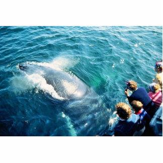 Observación de la ballena (Humpback) Escultura Fotografica