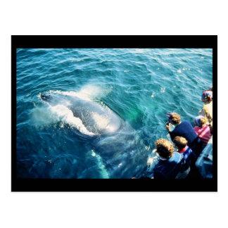 Observación de la ballena (Humpback) Postal