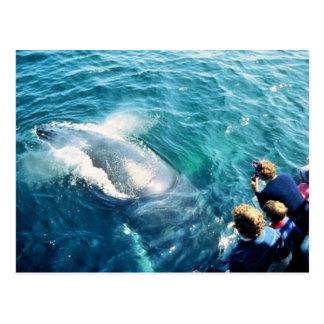Observación de la ballena (Humpback) Postales
