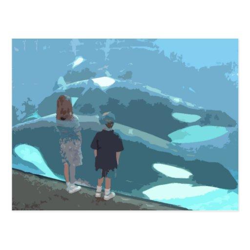 Observación de la ballena postales
