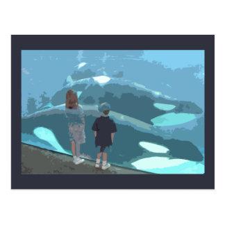 Observación de la ballena postal