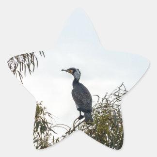 Observación de pájaros del cormorán de  de la pegatina en forma de estrella