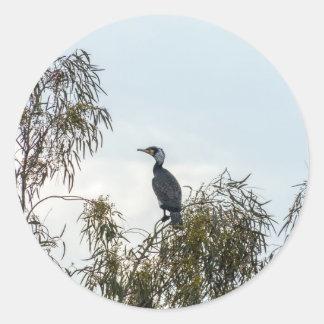 Observación de pájaros del cormorán de  de la pegatina redonda