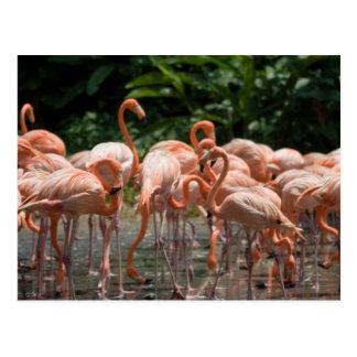 Observación de pájaros tarjetas postales