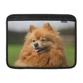 Observación de Pomeranian Fundas Para Macbook Air