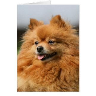 Observación de Pomeranian Tarjeta De Felicitación