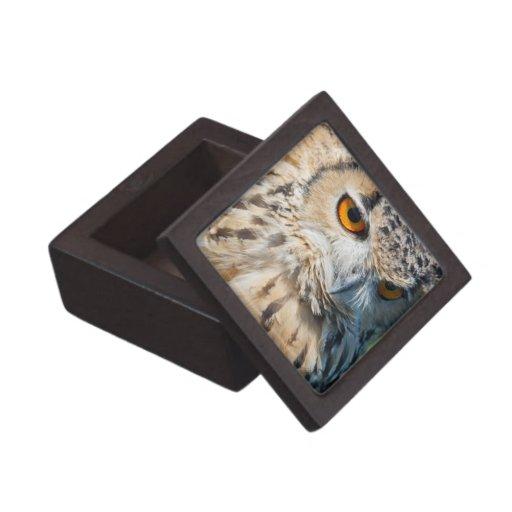 Observación del búho cajas de regalo de calidad