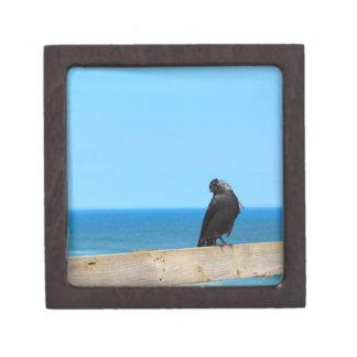Observación del cuervo caja de regalo de calidad