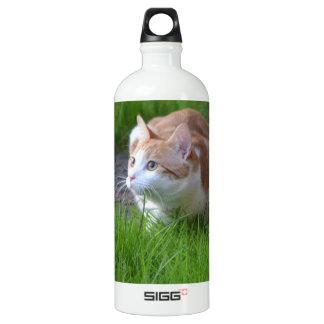 Observación del gato del jengibre