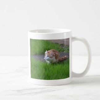 Observación del gato del jengibre taza