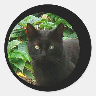 Observación del gato negro pegatina redonda