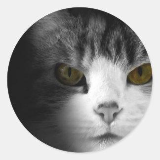 Observación del gato pegatina redonda