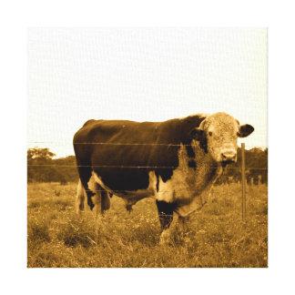 Observant Cow/Bull Photo Canvas