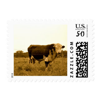Observant Cow/Bull Postage Stamp
