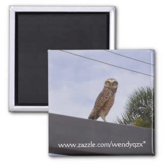 Observant Owl 2 Inch Square Magnet
