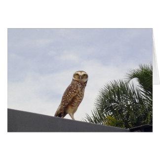 Observant Owl v2 Stationery Note Card