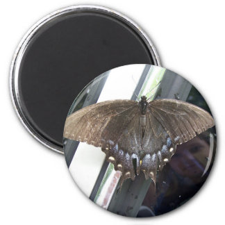 Observing Nature 2 Inch Round Magnet