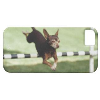 Obstáculo de salto de la chihuahua iPhone 5 protector