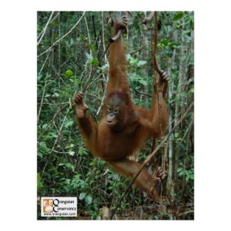 OC Orangutan Poster