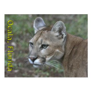 Ocala Panther Postcard