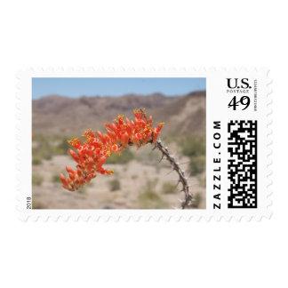Ocatillo Bloom 01 Stamps