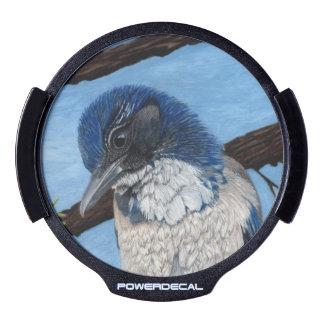 Occidentales bonitos friegan el pájaro de Jay Pegatina LED Para Ventana