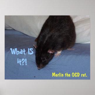 OCD rat poster