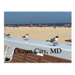 ocean, city, maryland, beach, birds, umbrellas,