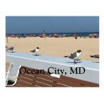 ocean, city, maryland, beach, birds, umbrellas,