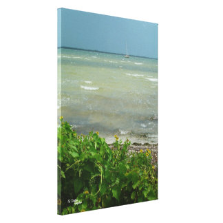 Ocean daisies Stretched Canvas Print