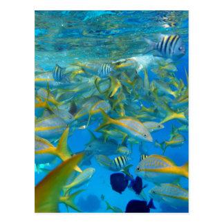 Ocean Fish Post Card