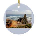 rocks, rocky, shoreline, tree, christmas tree,