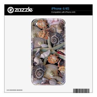 Ocean Gems Seashell Treasures in Magenta iPhone 4 Decals