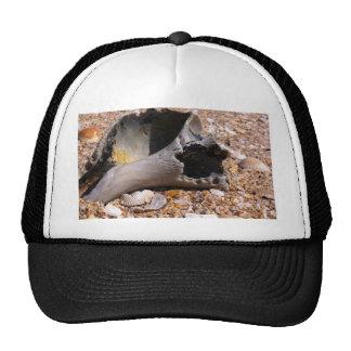 Ocean Sea Shell Trucker Hat