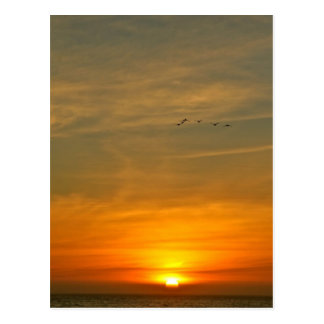 OCEAN SUNSET WITH MIGRATING BIRDS POSTCARD