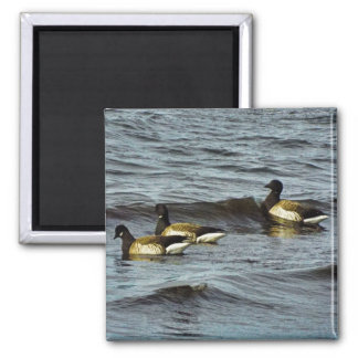 Ocean Swim Rhode island magnet