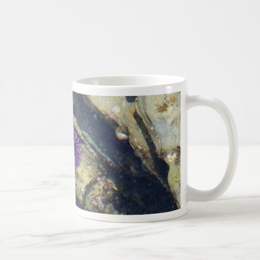 Ocean Tidepools Sea Urchins Coffee Mug